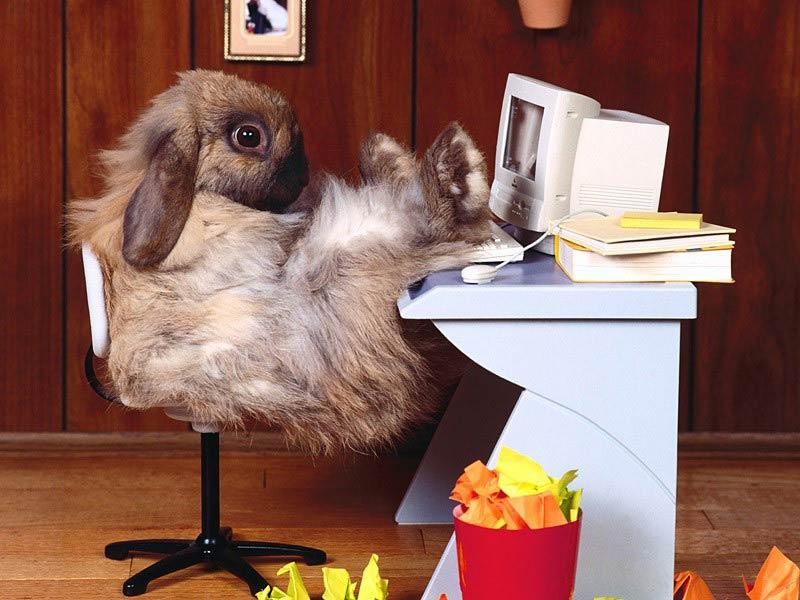 Lazy Rabbit